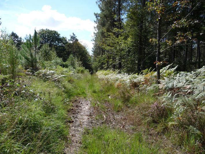 La Forêt domaniale du Gâvre à 40 km au nord-ouest de Nantes