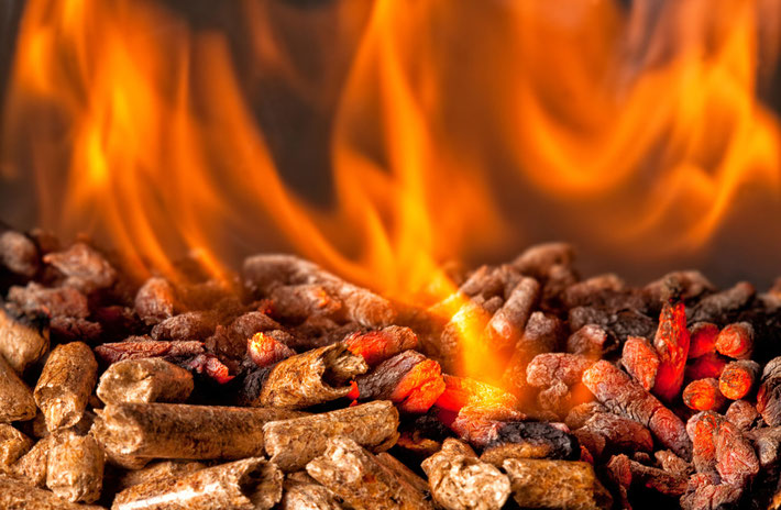 Bild: Miscanthus als Brennstoff