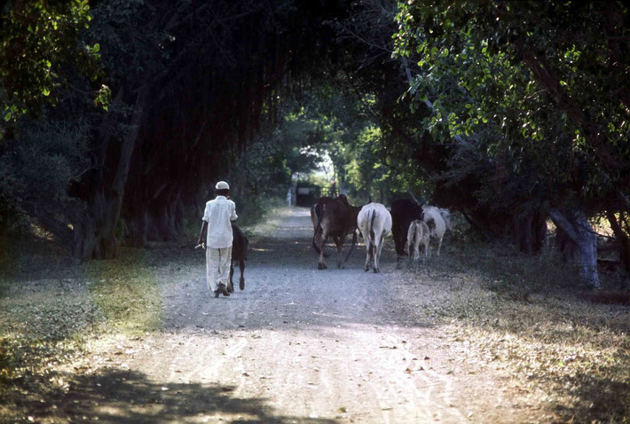 1975 ; Road to Meherazad gates - photo taken by Anthony Zois
