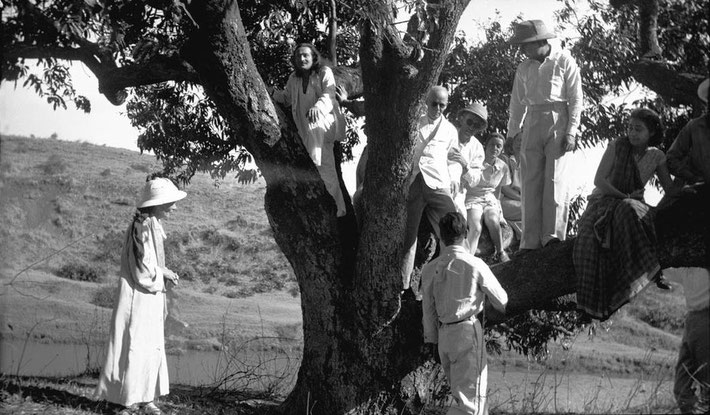MSI Collection ; 1937 - Trimbak, India. Adi is standing on the branch wearing a hat