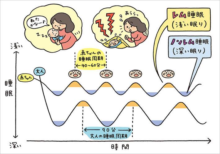 赤ちゃんの睡眠周期と大人の睡眠周期のイラスト