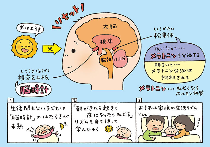 脳時計についてのイラスト