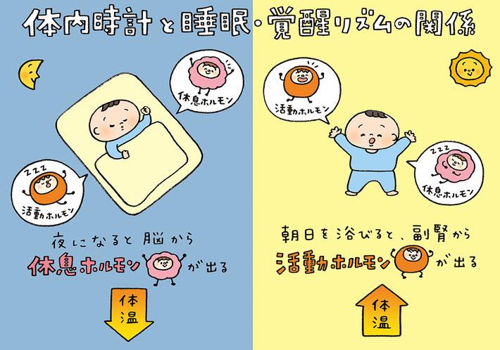 体内時計と睡眠・覚醒リズムの関係のイラスト