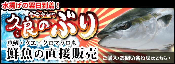 久良のぶり 鮮魚の直接販売