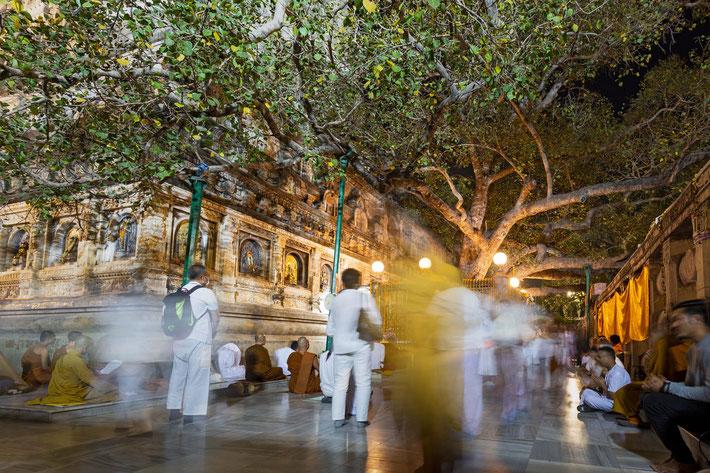 Bodhi Tree in Sarnath