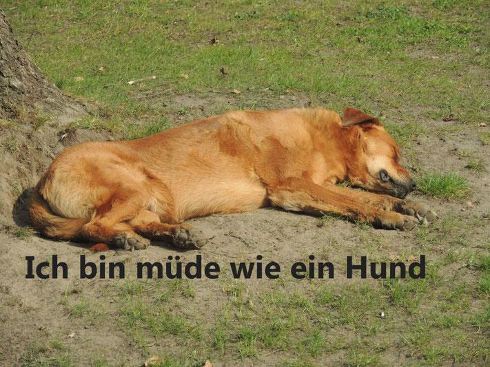 KArin Hohensee