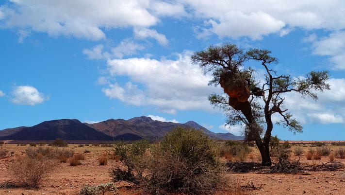 Le Namib Naukluft, Namibie