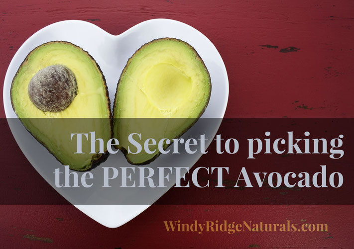 "Picking an ""adequately ripe"" avocado from the produce section can be a bit tricky unless you know the secret.  Learn the Secret to picking the PERFECT avocado  www.WindyRidgeNaturals.com/living-light-blog"