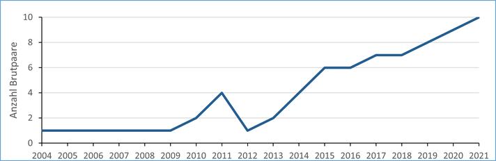 Bestandsentwicklung Brachvogel von 2004 bis 2021