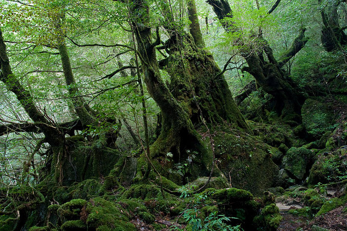 Yakushima Source: Wikipedia