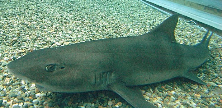 You will see many cute sharks ( real name: Banded houndshark) Source: Wikipedia
