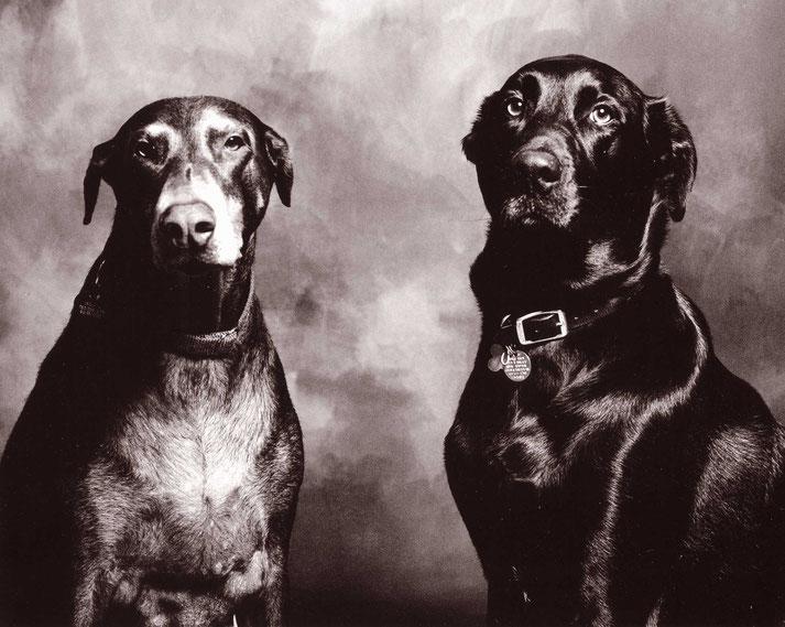Portrait de deux chiens en noir et blanc. Crédit : CC0