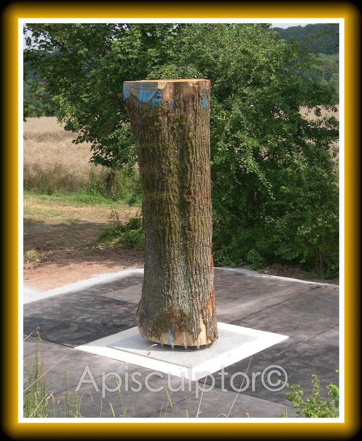 Ein Baum für Bienen, Korbach heute