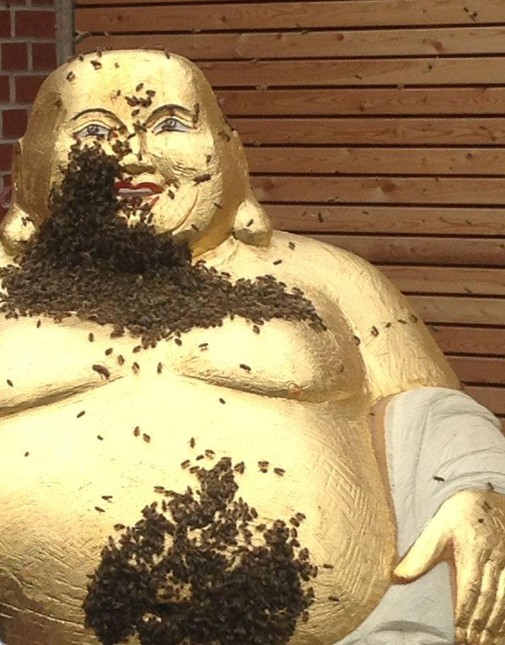 Ein Schwarm für den 'Lachende Buddha' für Bienen II in Fürth/Lohe; eingefangen von Imker Karl Laber. Zum 1. Mal konnte dieses Ereignis von einem Filmteam begleitet werden.