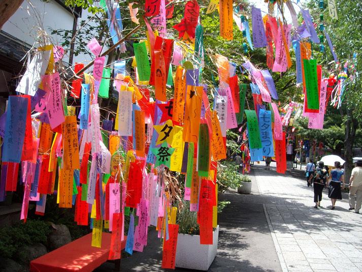 Baum verziert mit Wünschen zum Tanabata Fest