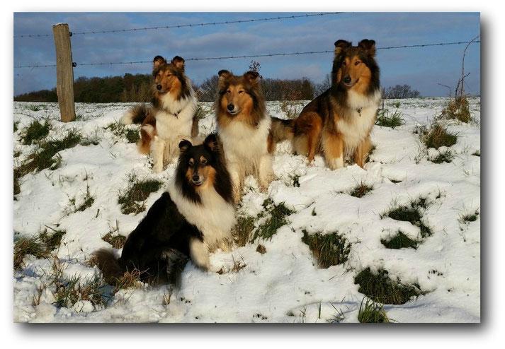 Das einzige Schneebild unseres Quartetts im Januar 2016