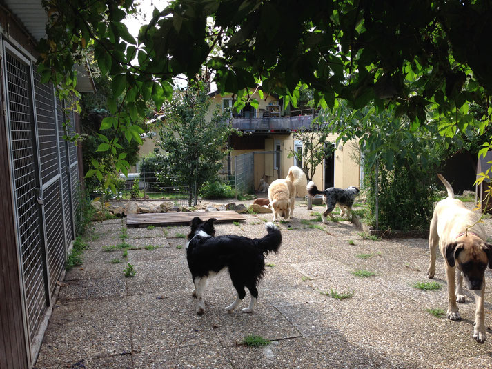 Gassigehen mit den Tagesbetreuungsgästen auf den Wiesen um die Tierpension Villa Kunterbunt herum.