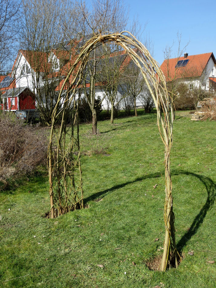 Weiden-Torbogen bei mir im Garten.