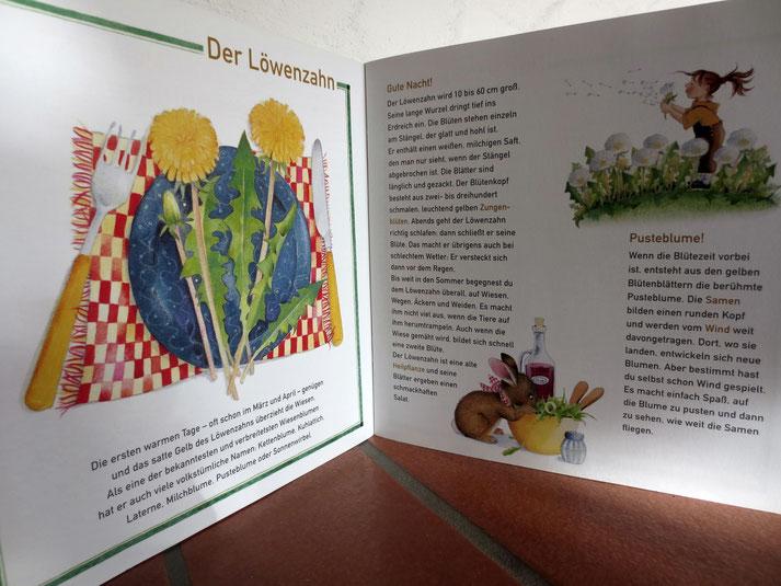 Löwenzahn-Infos