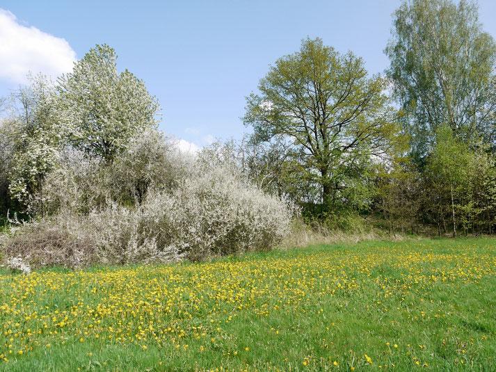 Sonnenwirbel-Wiese am Schmiedsberg in Neukenroth