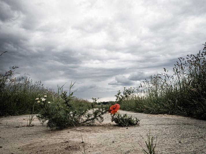 Ein Feldweg, der direkt nach Ungarn führt
