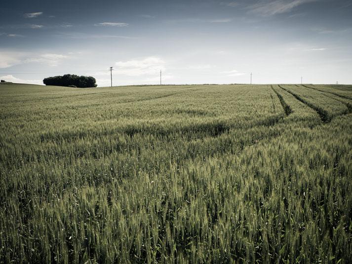 """Die obigen Bilder sind """"typisch"""" für diese Gegend  - Felder, die ich bei Neusiedl bei Güssing bzw. Gerersdorf-Sulz im Südburgenland aufgenommen habe"""