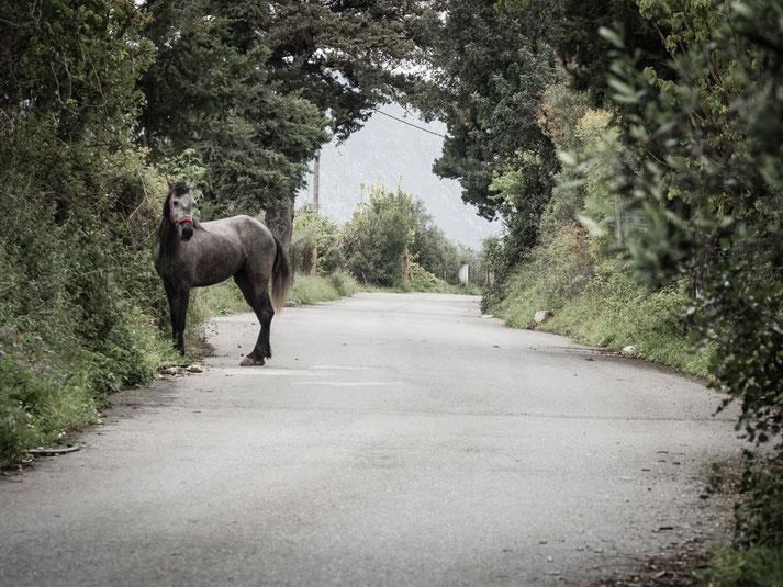 Begegnungen 2019, mit den man nicht rechnet (1): Pferd per Anhalter unterwegs ?