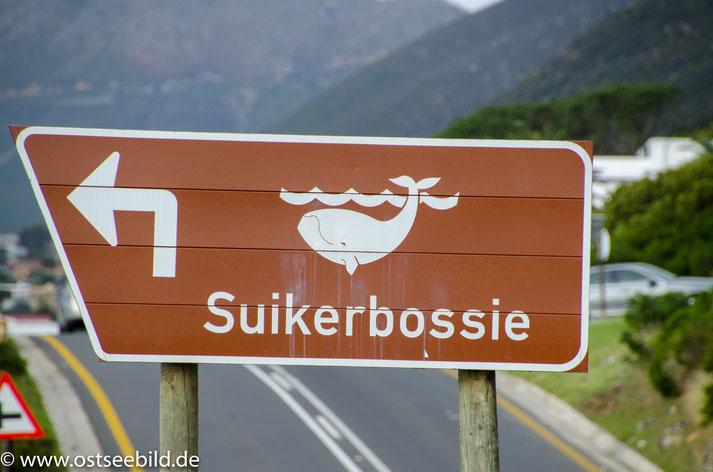 Schild Walbeobachtungspunkt Suikerbossie