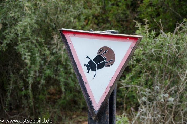 Schild Achtung Mistkäfer ( Dung Beeile)