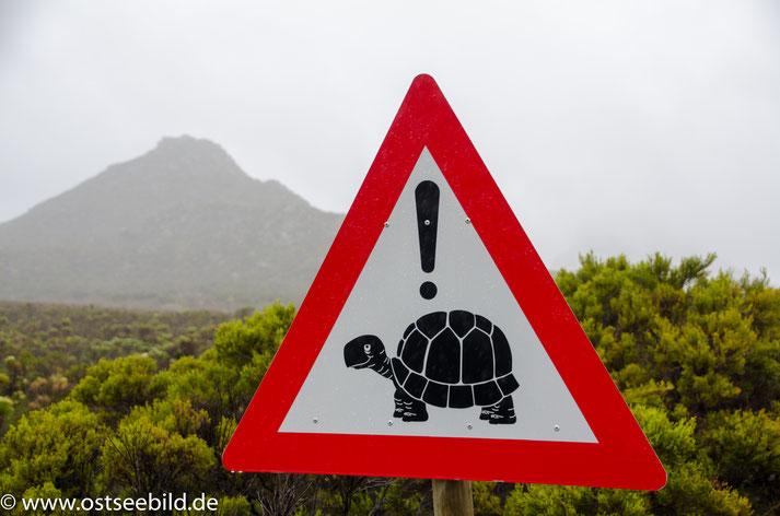 Verkehrsschild mit Schildkröte. Achtung Turtle.