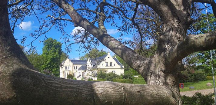23 Ferienwohnungen gibt es auf Gut Dalwitz, auch im dem von der Familie von Bassewitz bewohnten Herrenhaus.