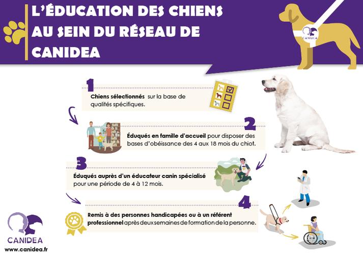 1 - sélection sur des qualités spécifiques 2- éducation en famille d'accueil de 4 à 18 mois du chiot 3-éducation canine spécialisée pendant 4 à 12 mois puis remise au maître