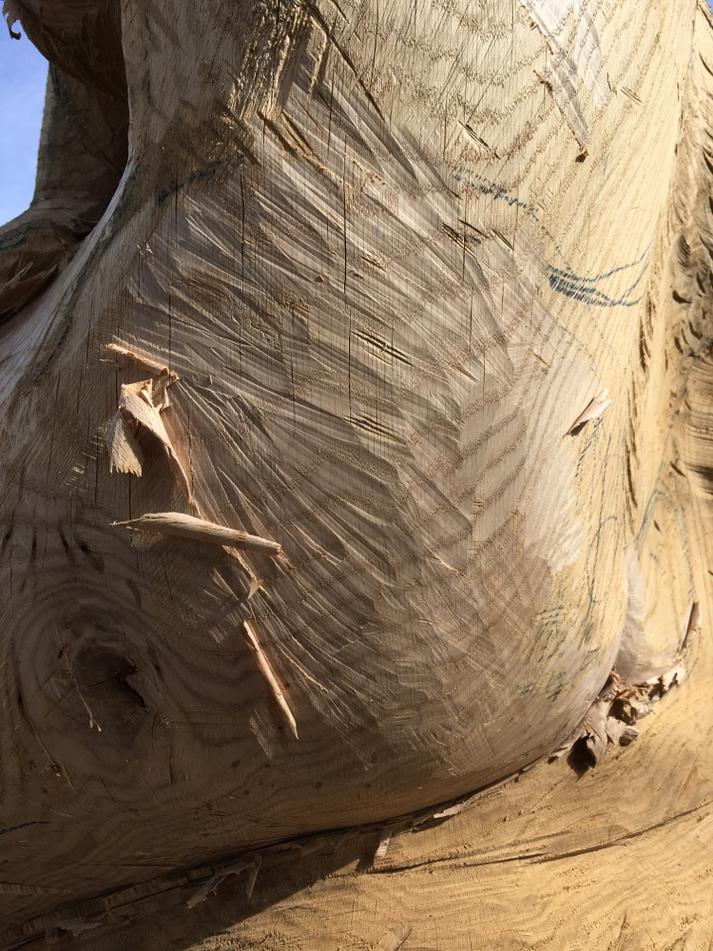 Eichenstammholz geschnitzt für Bienenhäuser, Francesca ganz nah