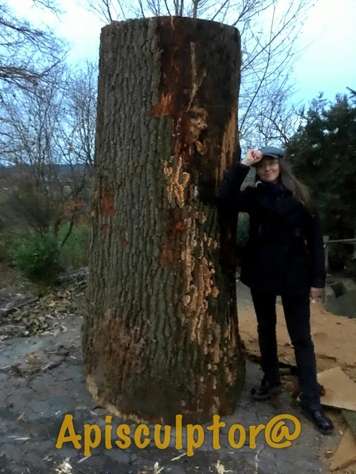 Tronc d'arbre pour une ruche d'abeilles