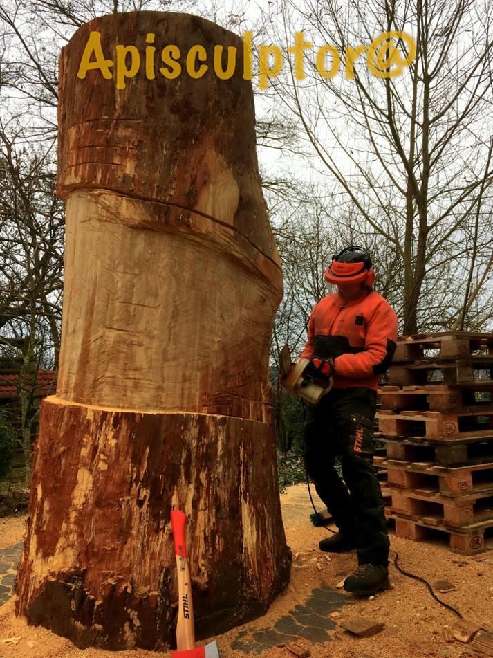 Splint und Kernholz bei der Eiche