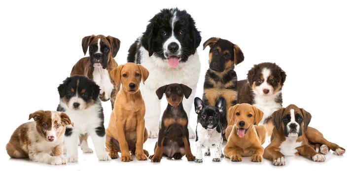Gassi-Service Dog-Walking Betreuungsangebote Sonntags Feiertags Beatrice Isenburg Pfotencampus Pfotenservice