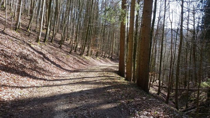 Die meisten Waldwege sind schon wieder trocken... Es geht bergab noch Weiler / Blaubeuren...
