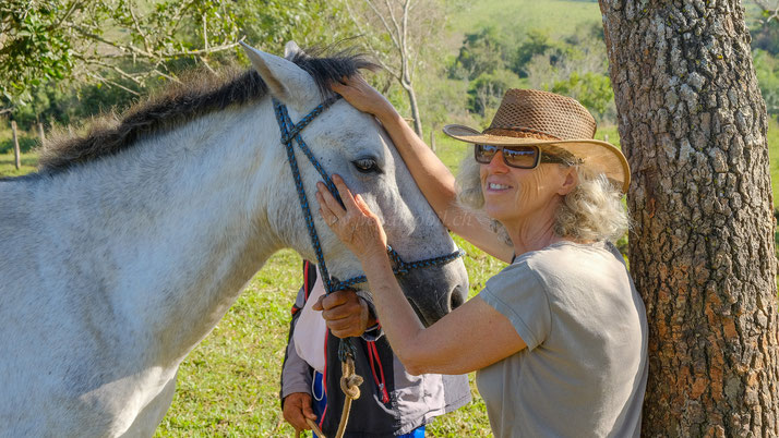 Hufe schneiden beim Pferd