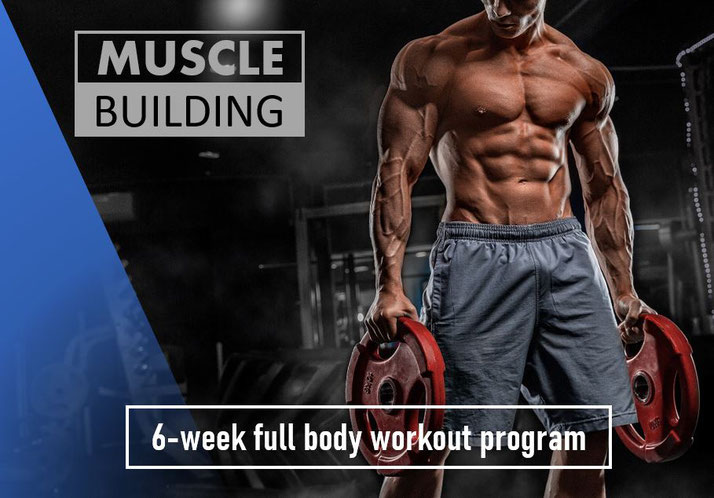 6 week full body workout plan