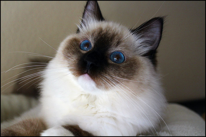 Maggy / seal mitted
