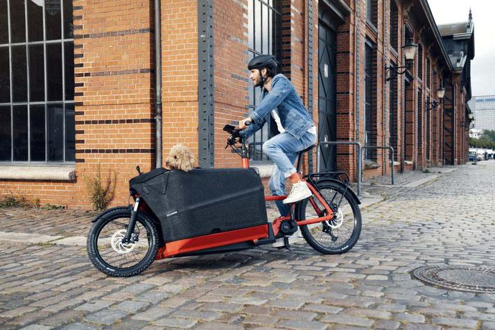 Mann fährt mit seinem Hund in Riese & Müller Packster 70 durch die Stadt
