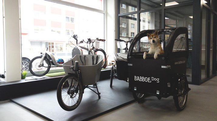 Wir lieben Lastenräder - im Lastenfahrrad-Zentrum sitzt ein Hund begeistert im Babboe Dog