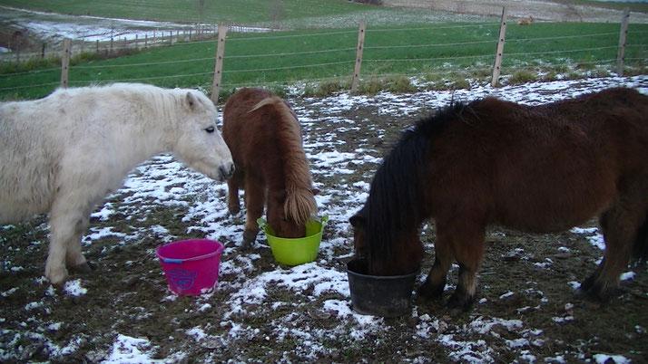 Les trois poneys qui mangent ensemble