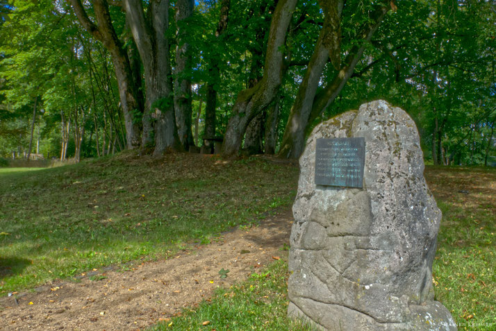 Hexenbaum bei Rennerod
