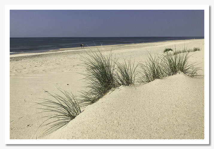 Dünengras Weststrand Sylt  © c.rebl