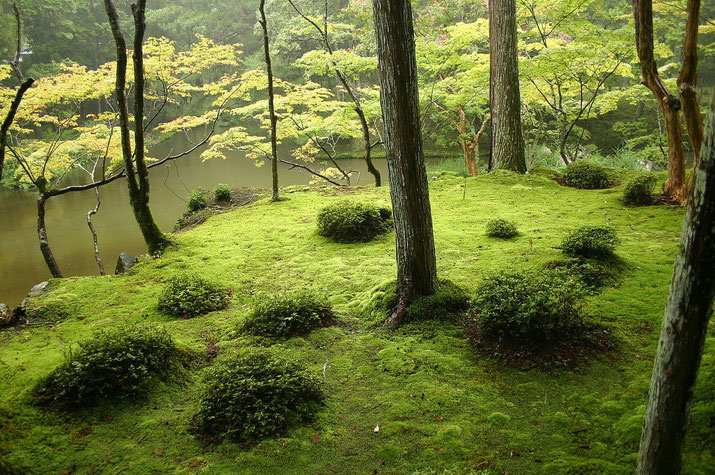 Moss is very important part of Zen garden in Japan. There are many types of moss used in the garden  Source: Wikipedia