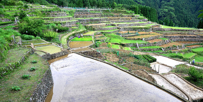 Rice paddies in Nichikou, Yatsushiro city Source: Wikipedia