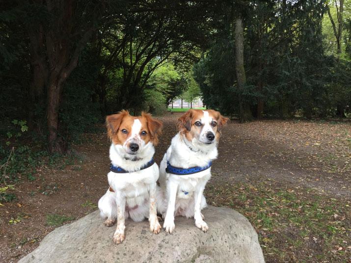 2016 - unser aktuelles Duo - Gin und Amy aug dem Kromifels