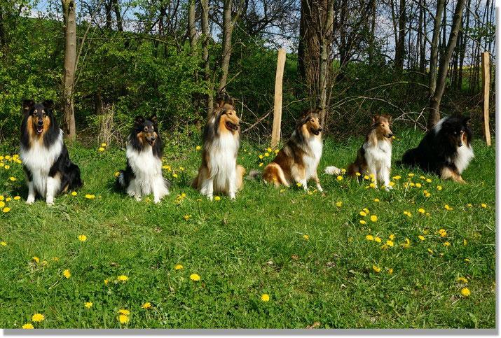 v. li.: Akani, Klara, Bjarki, Boots, Meggy, Balou  (Foto: G. Reiss)