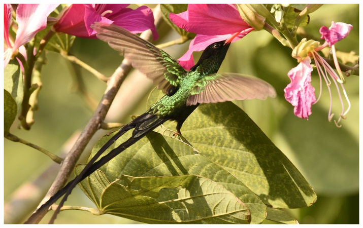 See the unique Hummingbirds in Barney's FLower&Hummingbird Garden Jamaica